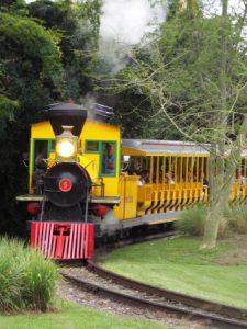 Serengeti EXpress Train
