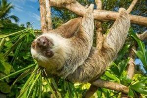 Sloths at Nairobi Region