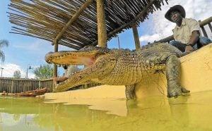 Gator Spot at FSA Orlando